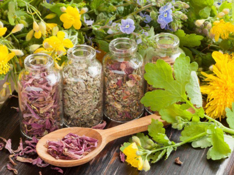 Травяные сборы от повышенного давления: рецепты
