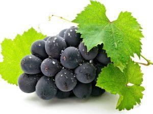 гроздь темного винограда в каплях росы