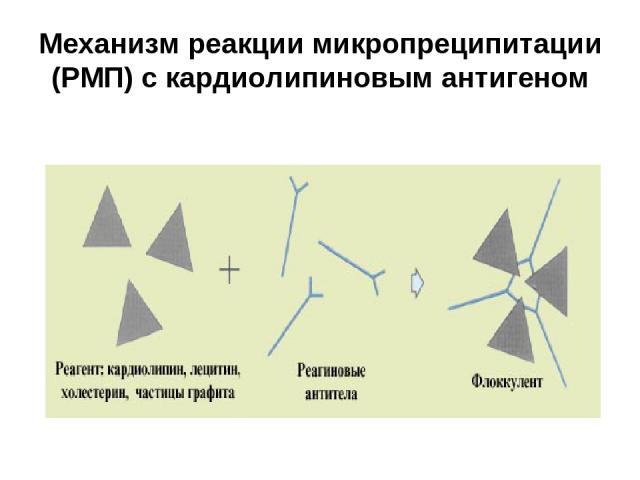 Механизм реакции РПМ теста