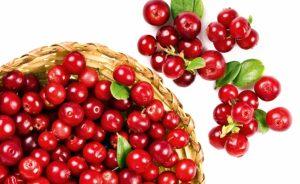 ягоды клюквы в корзинке