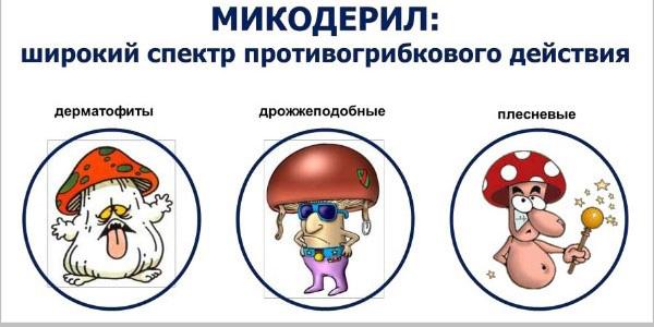 широкий спектр грибов