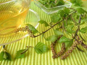 отвар на основе листьев и почек березы