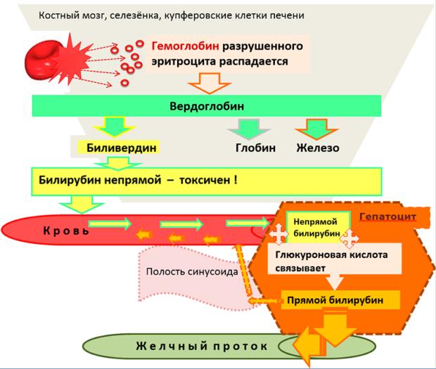 Способы понижения билирубина в крови