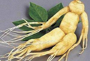 корень женьшеня в виде тела человека
