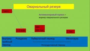 овариальный резерв яичников анализ
