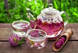 чай на основе клевера лугового