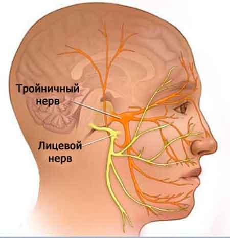 Разница между тройничным и лицевым нервом