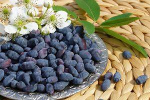 ягоды жимолости на подносе