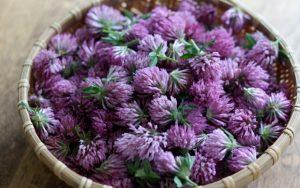 цветки клевера красного в плетенной емкости