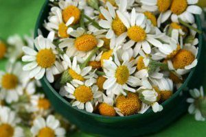 заготавливаем цветы ромашки